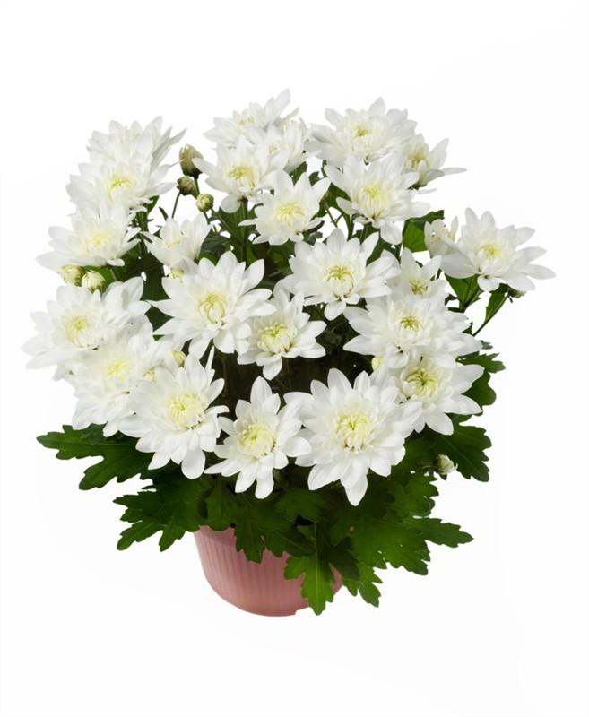 Комнатные цветы Уральск